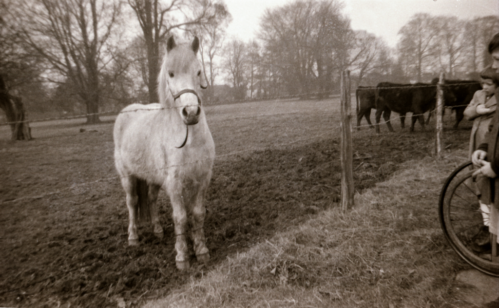 Friendly horse.